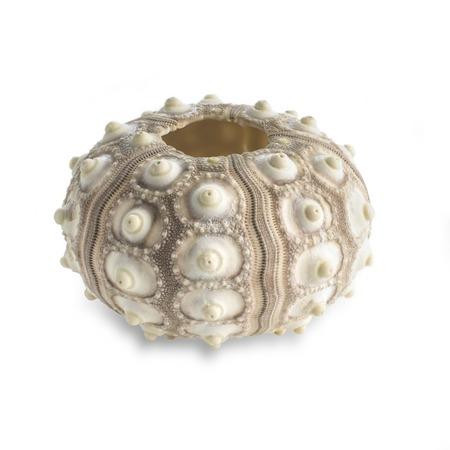 Sputnik sea urchin shell LANG_EVOIMAGES