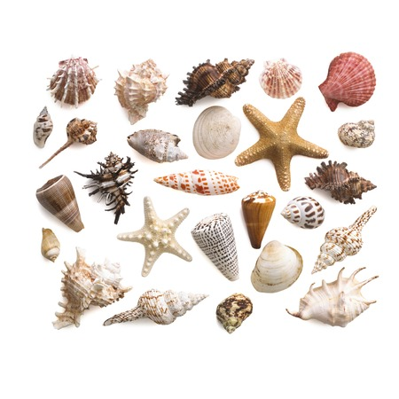 Selection of sea shells and star fish LANG_EVOIMAGES