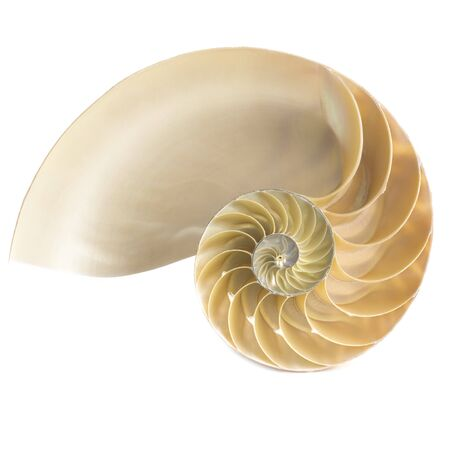 Halved chambered nautilus shell LANG_EVOIMAGES