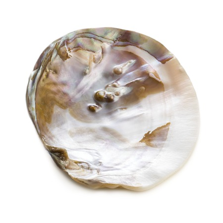 freshwater pearl: Freshwater pearl oyster shell