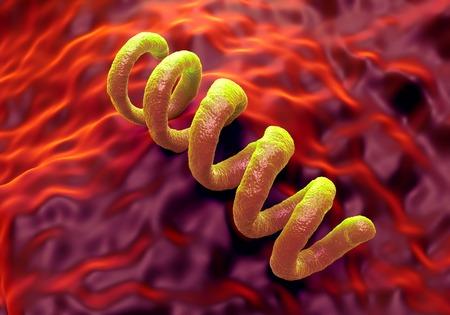 sexually transmitted disease: Treponema pallidum syphilis bacterium