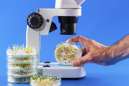 petri dish: Seeds in petri dish
