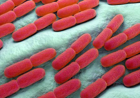 Lactobacillus bacteria, illustration