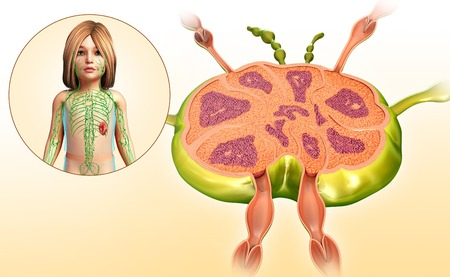 lymph: Lymph node of a child, illustration