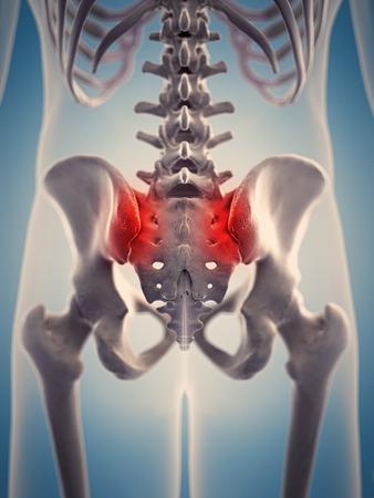 Menschliche Skelettstruktur, Illustration Lizenzfreie Fotos, Bilder ...