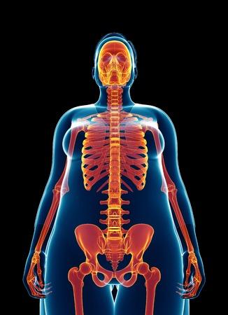 skeletal system: Human skeletal system, illustration