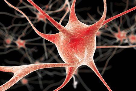Nerve cells, illustration