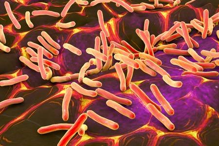 Rod-shaped bacteria, illustration