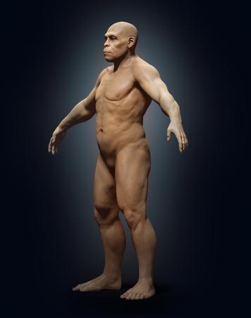 erectus: Homo erectus, illustration