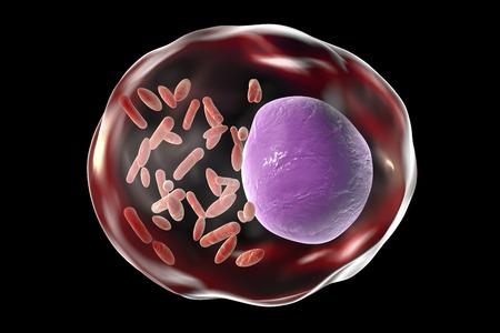 typhus: Rickettsia bacteria, illustration