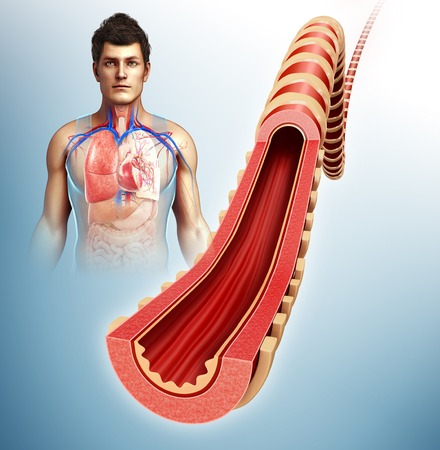 bronchus: Bronchus of the human lung, illustration