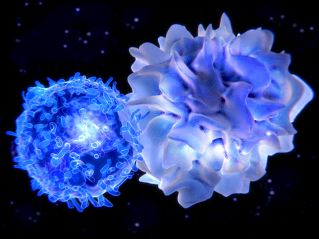 T-cell and dendritic cell interacting