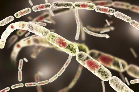 Anthrax bacteria, illustration