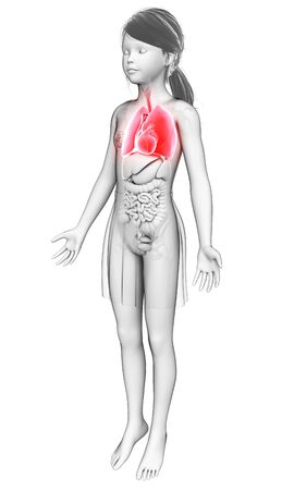 respiration: Human respiratory system, illustration LANG_EVOIMAGES