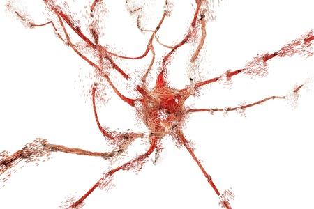 apoptosis: Apoptosis of a neuron, illustration