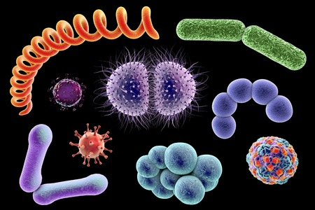 microbes: Microbes, illustration