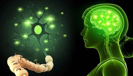 Human nerve cell, illustration LANG_EVOIMAGES