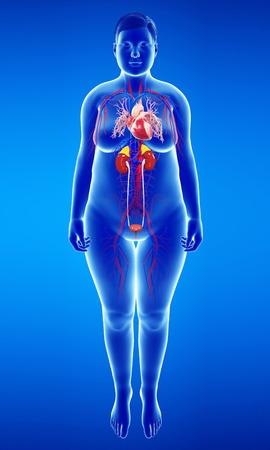 bronchioles: Human internal organs, illustration