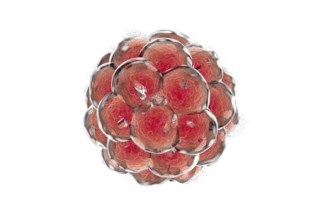 teratogenic: Human embryo destruction, illustration