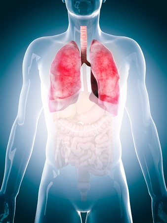 lugs: Human lungs, illustration