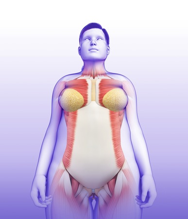 Female Muscular System Illustration Stock Photo Picture And