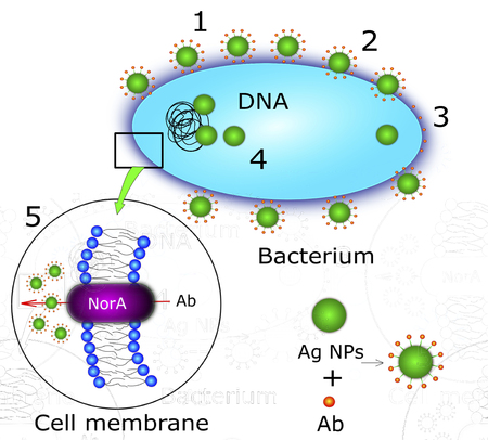 Antibacterial action of nanoparticle, illustration