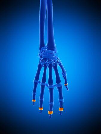 Cápsulas de la mano, ilustración
