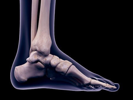 plantar: Foot muscle, illustration