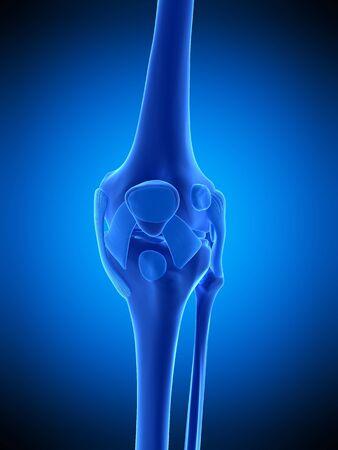 Knee ligaments, illustration