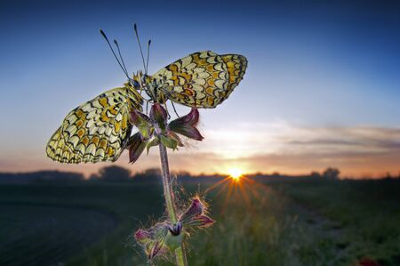 Two butterflies at sunrise LANG_EVOIMAGES