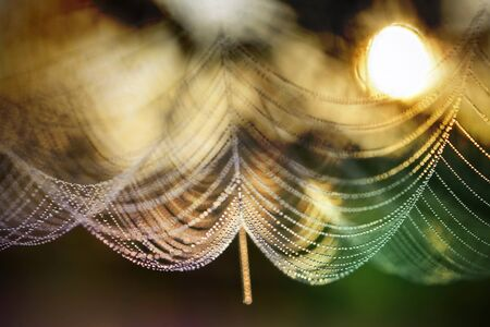 Drops of dew on a spiderweb