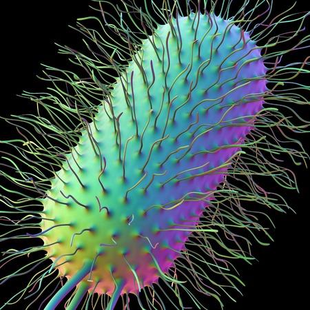 pili: E.coli bacterium, artwork LANG_EVOIMAGES