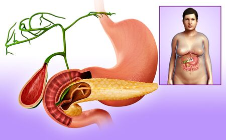 duodenum: Illustration of the gallbladder, duodenum and pancreas LANG_EVOIMAGES