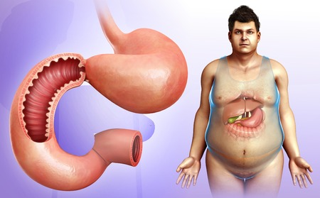 duodenum: Illustration of male stomach and duodenum LANG_EVOIMAGES