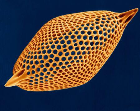 plancton: Radiolarian test, SEM LANG_EVOIMAGES