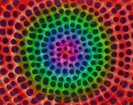 protozoan: Radiolarian test, SEM LANG_EVOIMAGES
