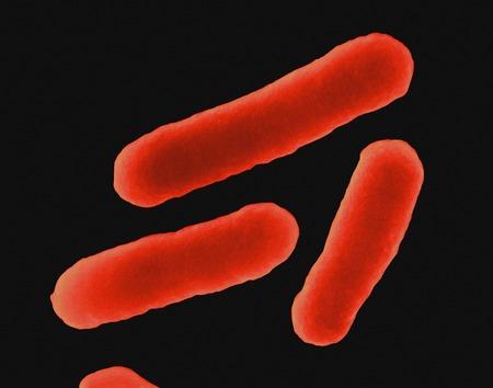 E. coli, SEM LANG_EVOIMAGES