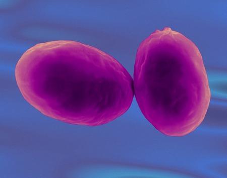 plancton: Giardia lamblia protozoan, SEM LANG_EVOIMAGES