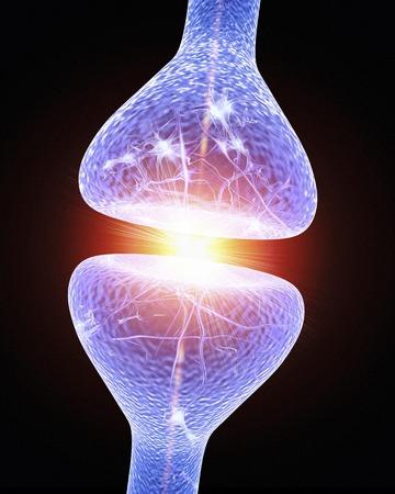 neurons: Nerve synapse, artwork