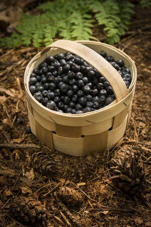 bilberries: Basket full of bilberries