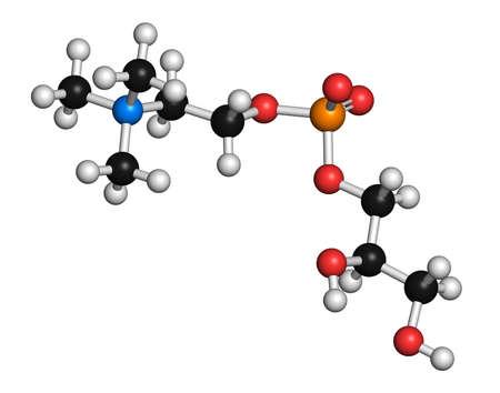 enhancer: Alpha-GPC molecule