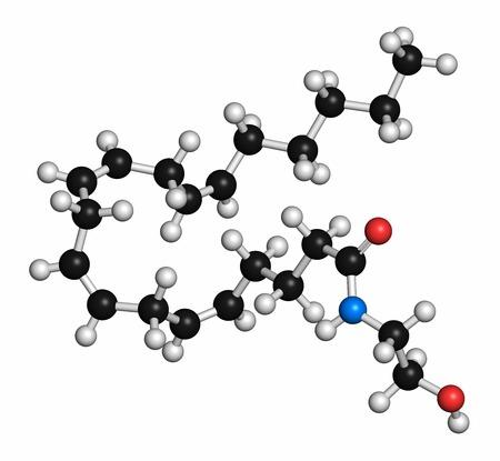 Anandamide endogenous cannabinoid molecule