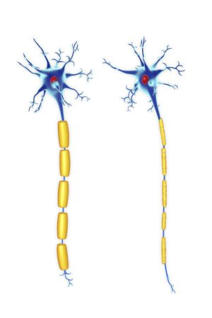 Nerve cells,illustration