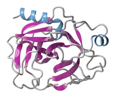 spectrometry: Trypsin digestive enzyme molecule,illustration