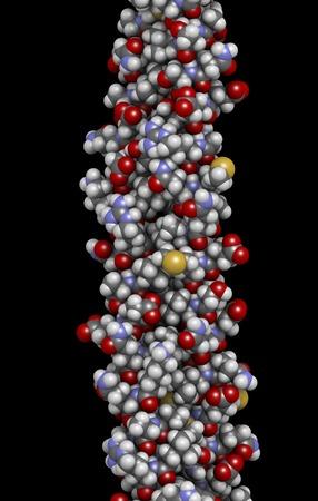 Keratin filament molecule,illustration LANG_EVOIMAGES