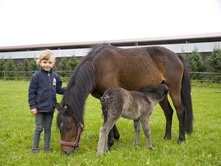Little girl with pony mare and the foal Stock Photo - 8763768