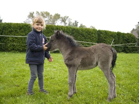 Little girl playing with newborn pony foal