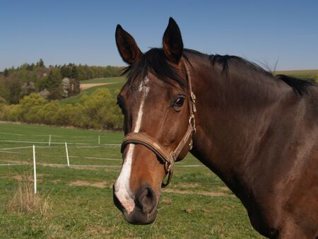 Sport horse in high condition on pasture