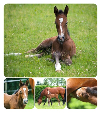 Collage of newborn foal with mare