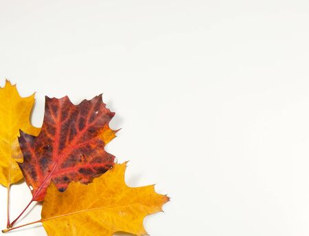 tricoloured: Colourfull autumn background made from leaves